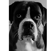 Arwen's Portrait in Black and White  -Boxer Dogs Series- Photographic Print