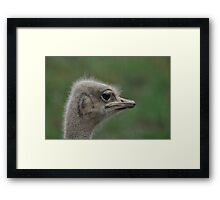 A Face Only a Mother Could Love Framed Print