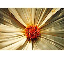 Petals of Contrast Photographic Print