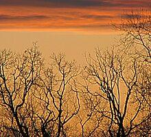 Tree Line by PPPhotoArt
