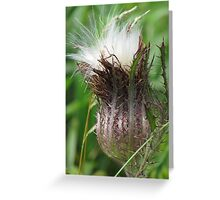 Soft Yet Prickly Greeting Card