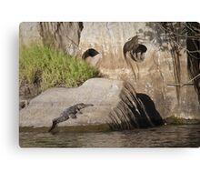 freshwater croc at geikie gorge, wa Canvas Print