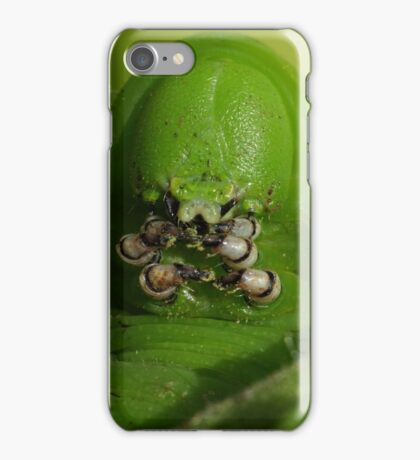 Tobacco Hornworm with Aphid  iPhone Case/Skin