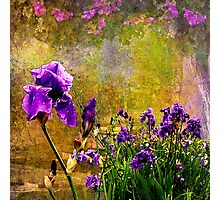 Iris Garden Photographic Print