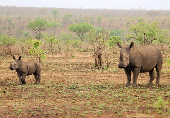 WHITE RHINOCEROS MOTHER AND BABY by Magaret Meintjes