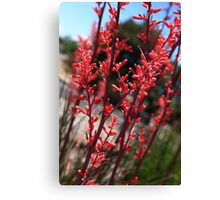 Red Yucca Canvas Print