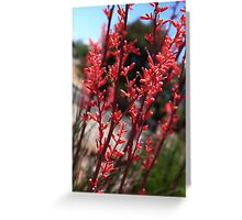 Red Yucca Greeting Card