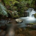 The source of life by Alistair Wilson