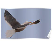 Gull Inflight Poster