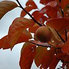 Autumn persimmon in the rain by turningjapanese