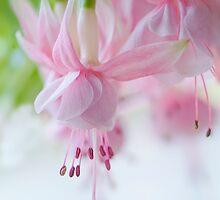 Candy Pink by Jacky Parker
