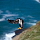 Clear for landing by Mark Baldwyn
