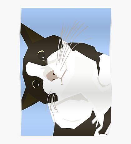 Hello Cat Poster