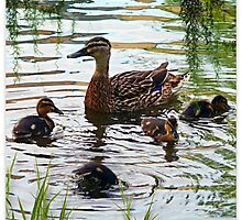The Mallard Family by Morag Bates