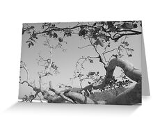 undying tree Greeting Card