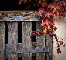 Weathered by Barb Leopold