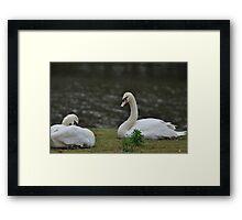 The Swans Framed Print