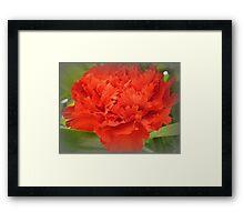 Carnation - Brilliant Red Framed Print