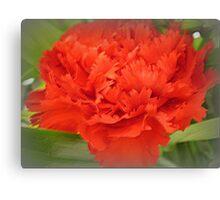 Carnation - Brilliant Red Canvas Print