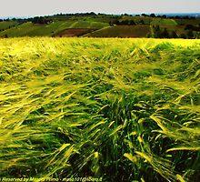 Il Vento e il Grano ( The Wind and the Wheat) - Montebudello - ( Monteveglio Bologna Italy ) -_1515- by primo masotti