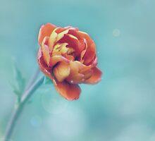 Orange by Helen Rushbrook