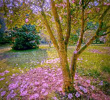 Pink Blossoms by Gerry Chaney
