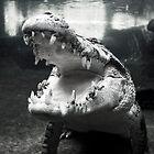 Rex The Crocodile by baddoggy
