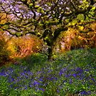 Bluebells And Tree by ajgosling