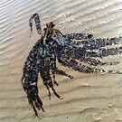 Seaweed Sand & Sea by Merice  Ewart-Marshall - LFA