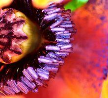 Poppy Puzzle by missmoneypenny