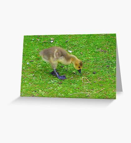 Fluff. Greeting Card