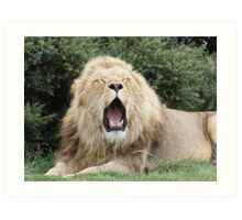 YAWNING LION Art Print