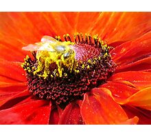 Pollination of Red Flower Photographic Print