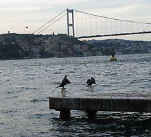 The cormorants  by rasim1