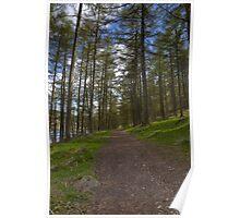 Woodland Path, Ladybower Reservoir Poster