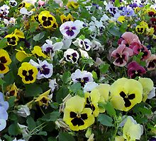 OK I ADMIT IT, I'M A PANSY AND SO ARE ALL MY FRIENDS :) by Kevin McGeeney