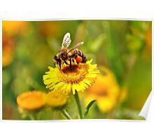 Bee & Wild Flower Poster