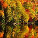 AN ADIRONDACK SHORELINE by MIKESANDY