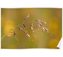 glassy grass Poster