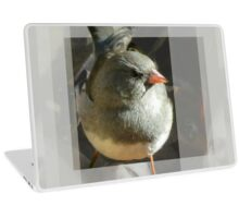The Little Dark-eyed Junco Laptop Skin