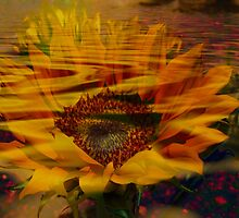 Flooded Sunflower by Beaches50