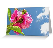 Bug's Eye-view Of A Peony Greeting Card