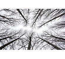 Trees, Poitou-Charante, France Photographic Print