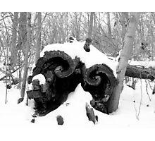 Snow covered log Photographic Print