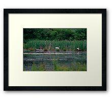 Clever Mister Swan Framed Print