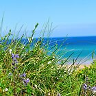 Grass and Sea by Paul  Eden