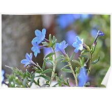 Tiny Blue Blooms Poster