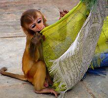 Monkey at Swayambhunath Stupa, Kathmandu by Maggie Woods