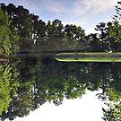 The Pond Upside Down by James J. Ravenel, III