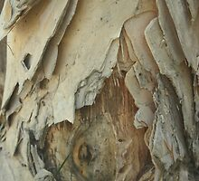 Bark  by heatherfriedman